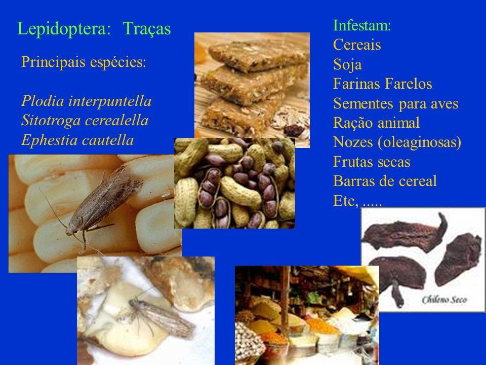 Lepidoptera: Traças Infestam: Cereais Soja Farinas Farelos