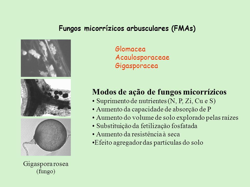 Modos de ação de fungos micorrízicos