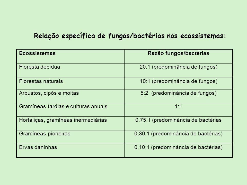 Razão fungos/bactérias