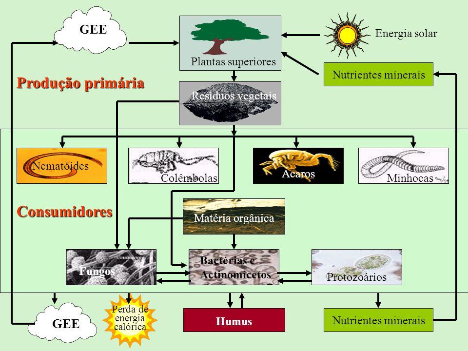 Produção primária Consumidores GEE GEE Plantas superiores