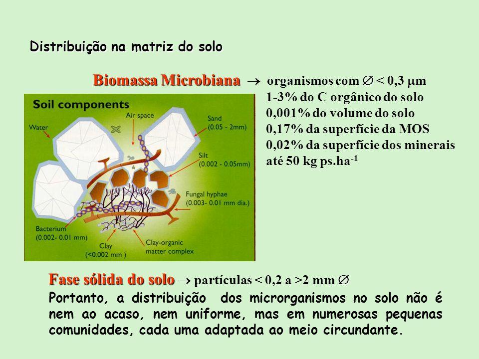 Biomassa Microbiana  organismos com  < 0,3 m