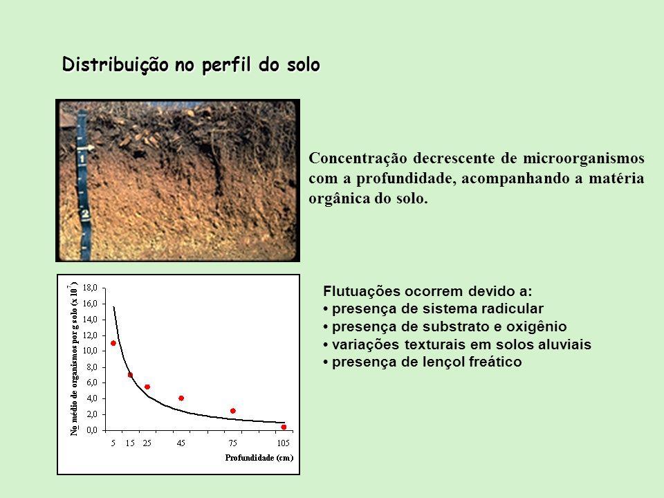 Distribuição no perfil do solo