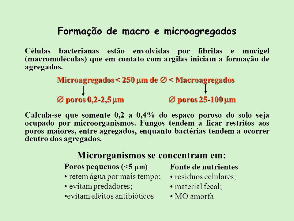 Formação de macro e microagregados