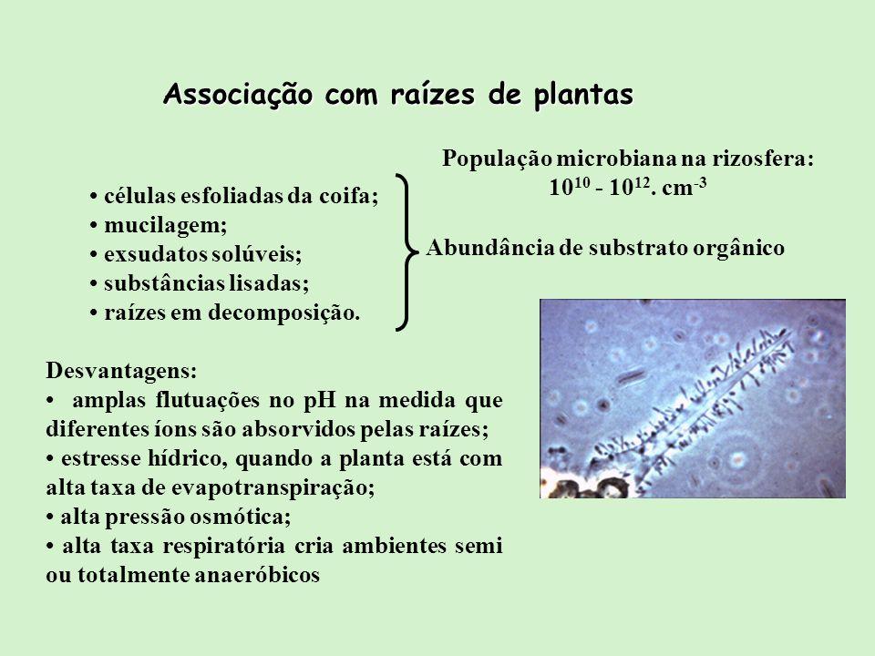 População microbiana na rizosfera: