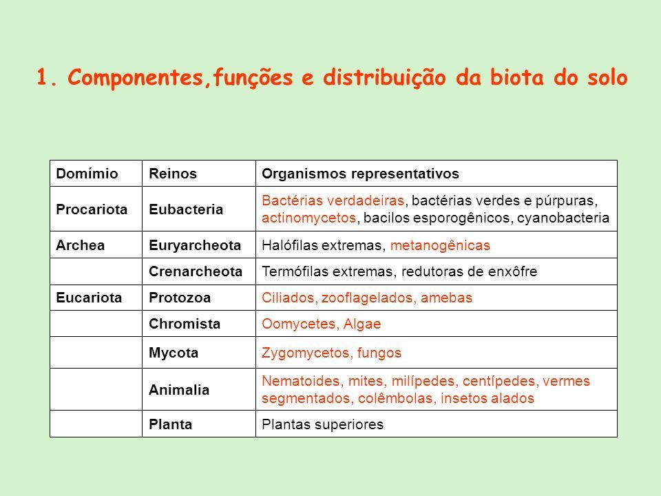 1. Componentes,funções e distribuição da biota do solo