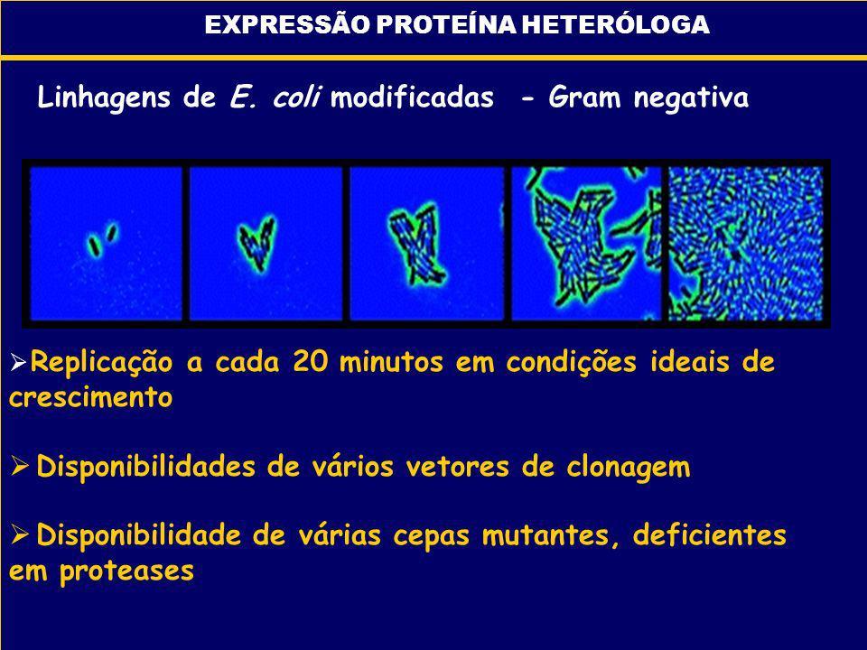Linhagens de E. coli modificadas - Gram negativa