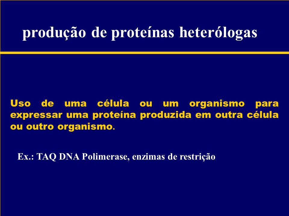 produção de proteínas heterólogas