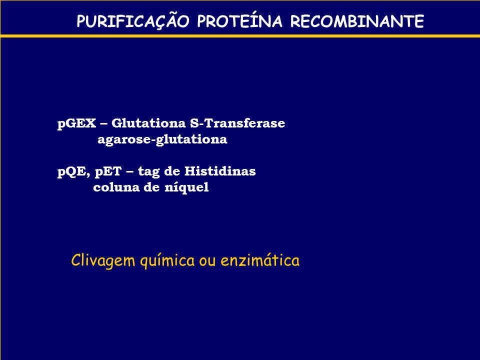 PURIFICAÇÃO PROTEÍNA RECOMBINANTE