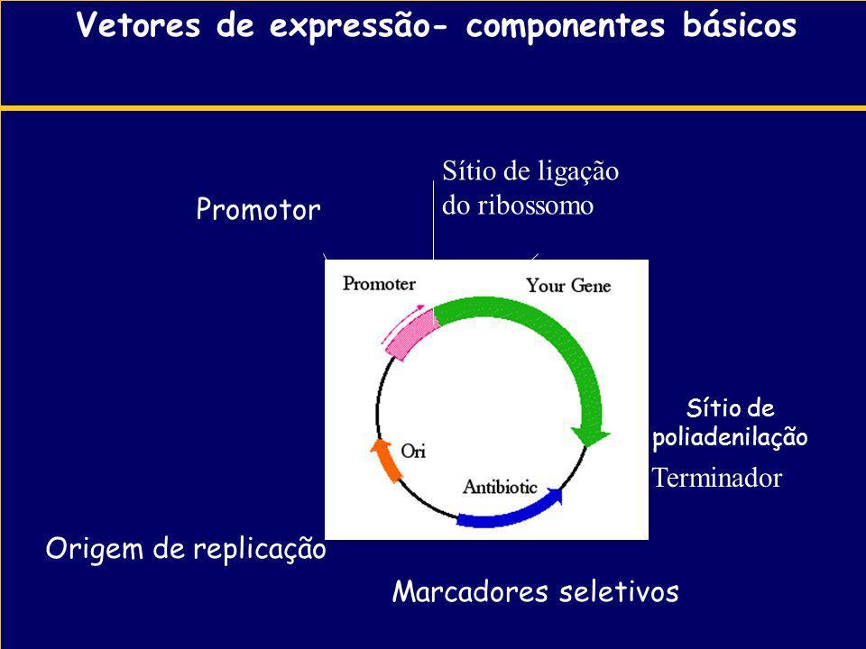 Vetores de expressão- componentes básicos