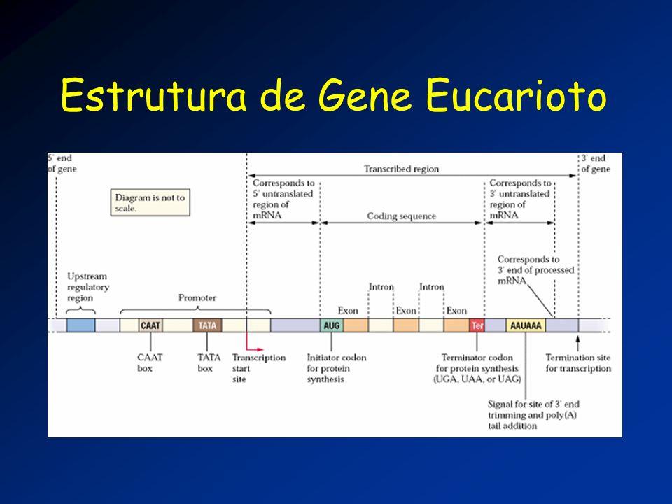 Estrutura de Gene Eucarioto