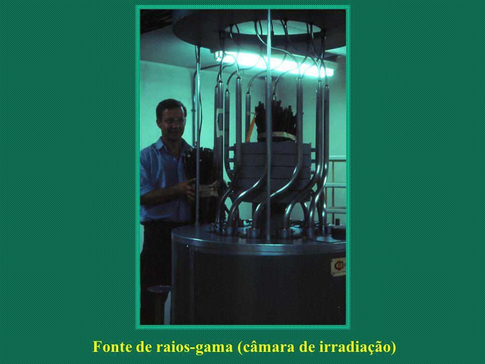 Fonte de raios-gama (câmara de irradiação)