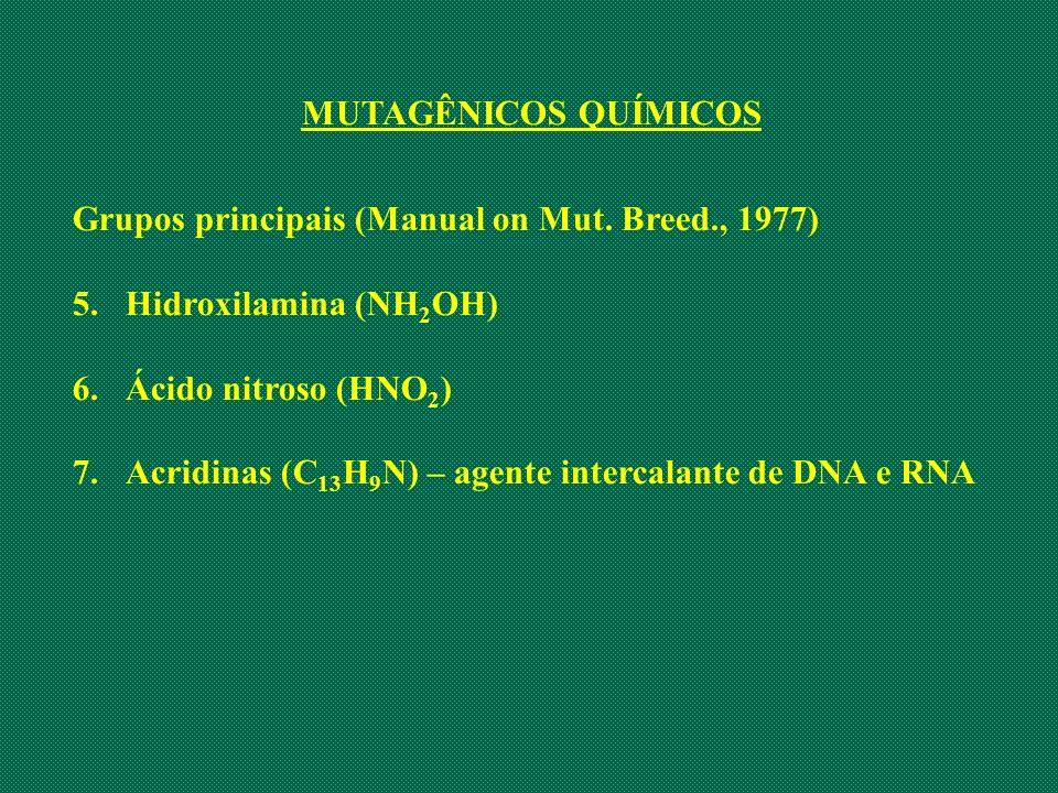 MUTAGÊNICOS QUÍMICOS Grupos principais (Manual on Mut. Breed., 1977) Hidroxilamina (NH2OH) Ácido nitroso (HNO2)
