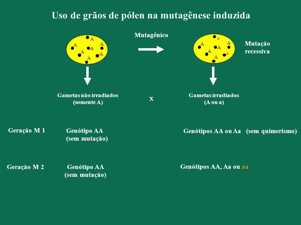 Uso de grãos de pólen na mutagênese induzida Gametas não irradiados