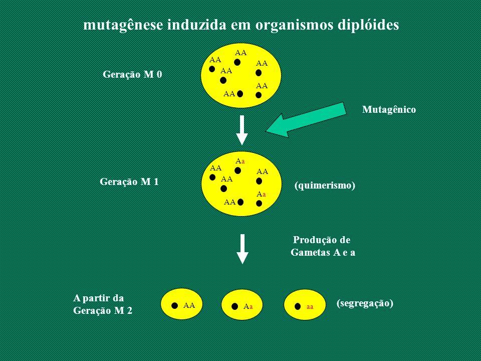 mutagênese induzida em organismos diplóides