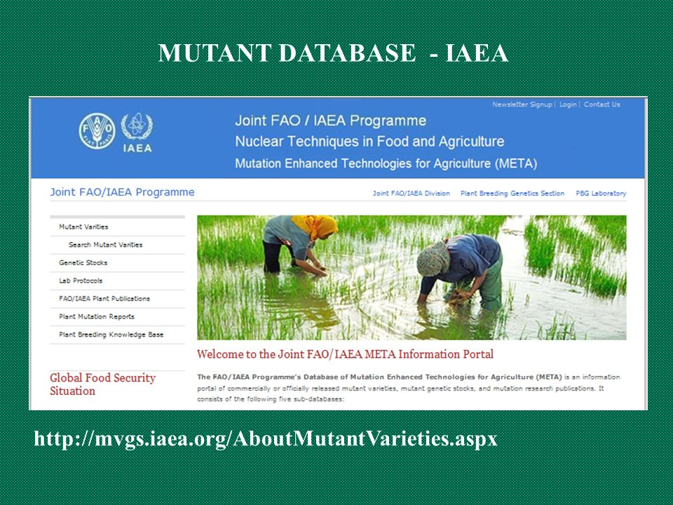 MUTANT DATABASE - IAEA http://mvgs.iaea.org/AboutMutantVarieties.aspx