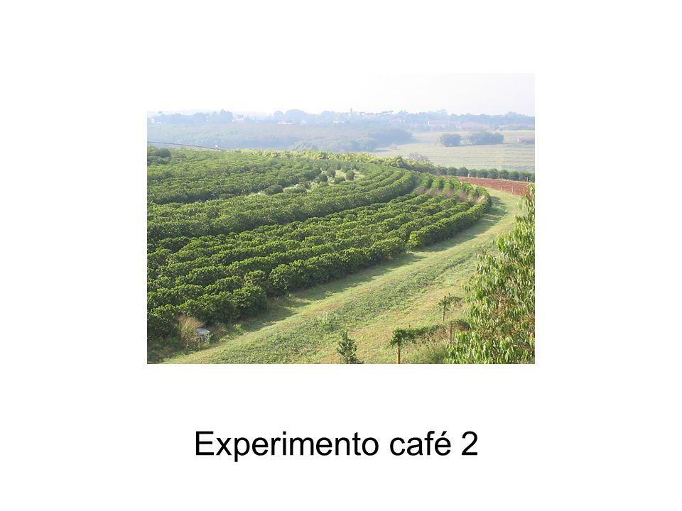 Experimento café 2