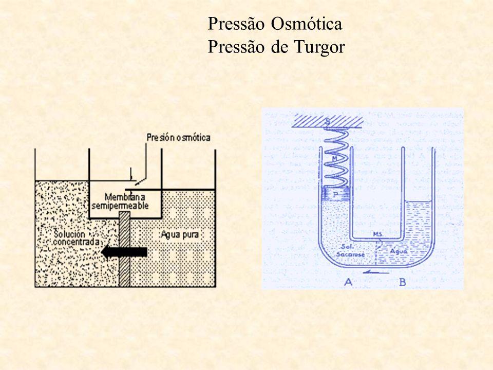 Pressão Osmótica Pressão de Turgor