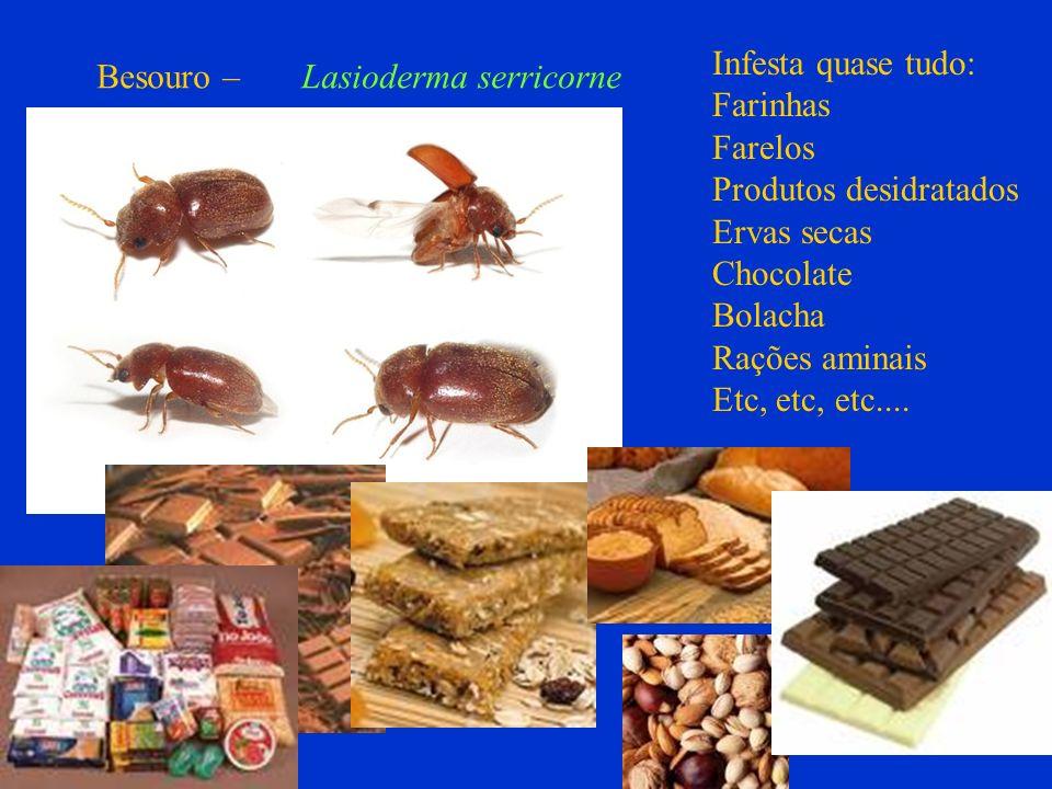 Infesta quase tudo:Farinhas. Farelos. Produtos desidratados. Ervas secas. Chocolate. Bolacha. Rações aminais.