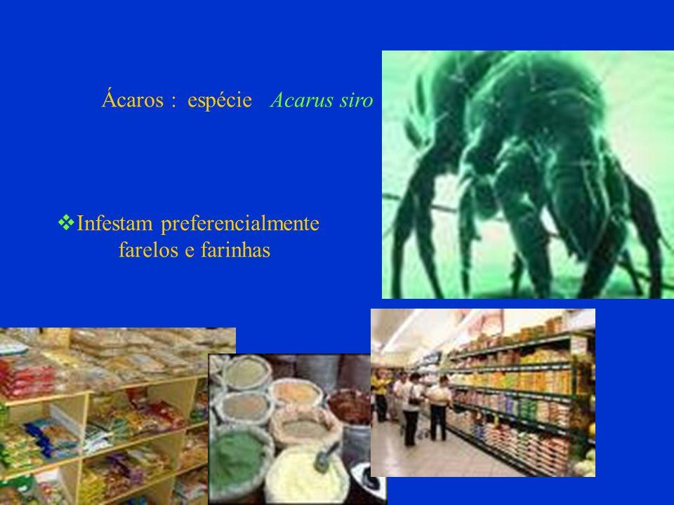 Ácaros : espécie Acarus siro