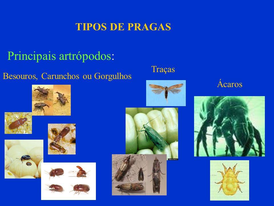 Principais artrópodos: