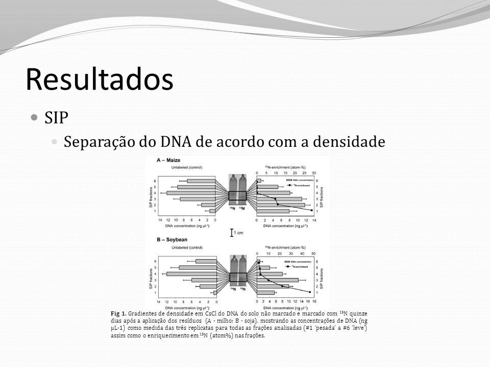 Resultados SIP Separação do DNA de acordo com a densidade