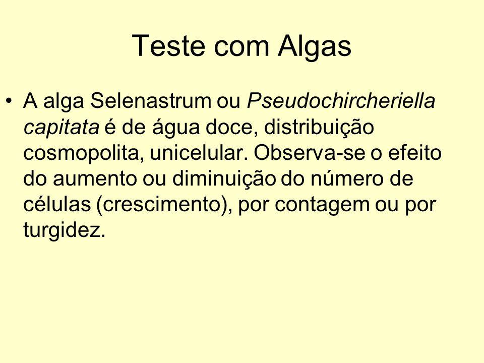 Teste com Algas