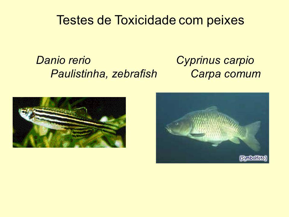 Testes de Toxicidade com peixes