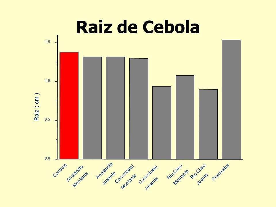 Raiz de Cebola Raiz ( cm ) Piracicaba Rio Claro Juante Montante
