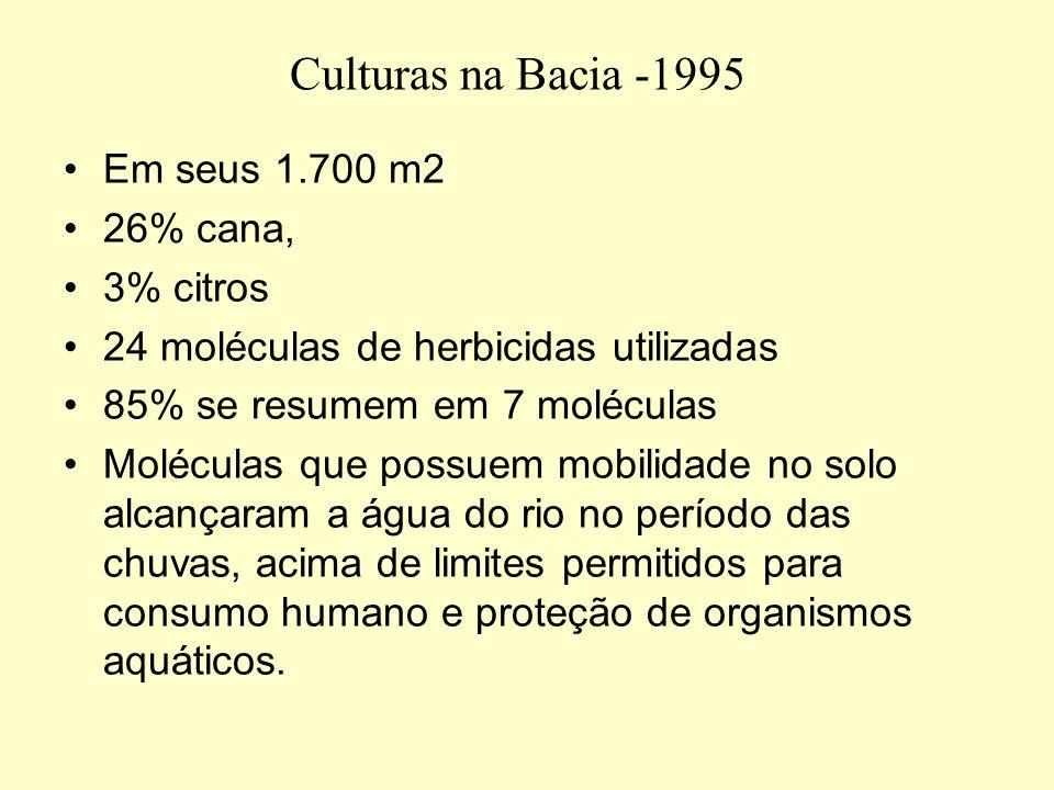 Culturas na Bacia -1995 Em seus 1.700 m2 26% cana, 3% citros