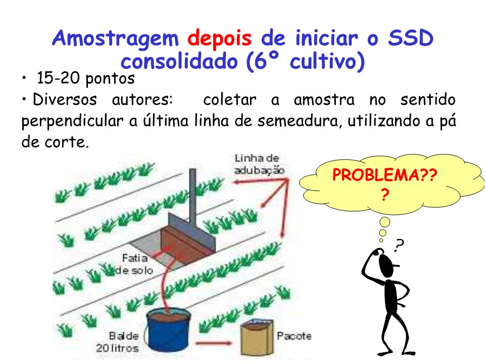 Amostragem depois de iniciar o SSD consolidado (6º cultivo)