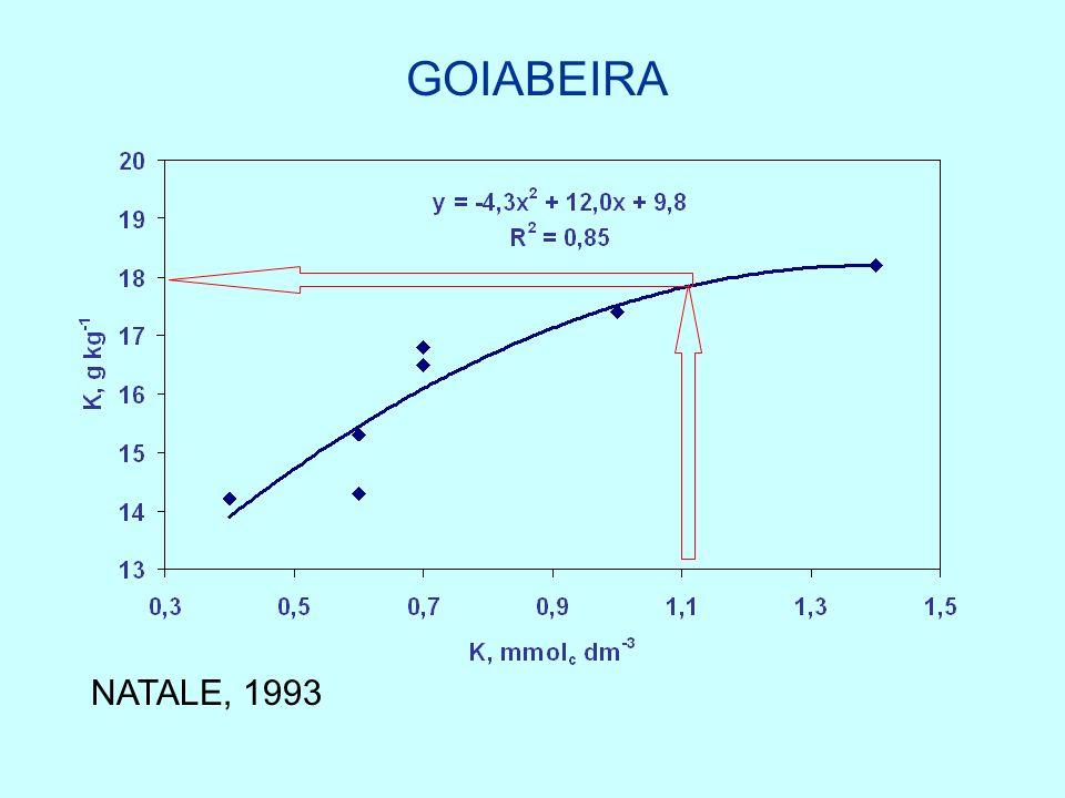 GOIABEIRA NATALE, 1993