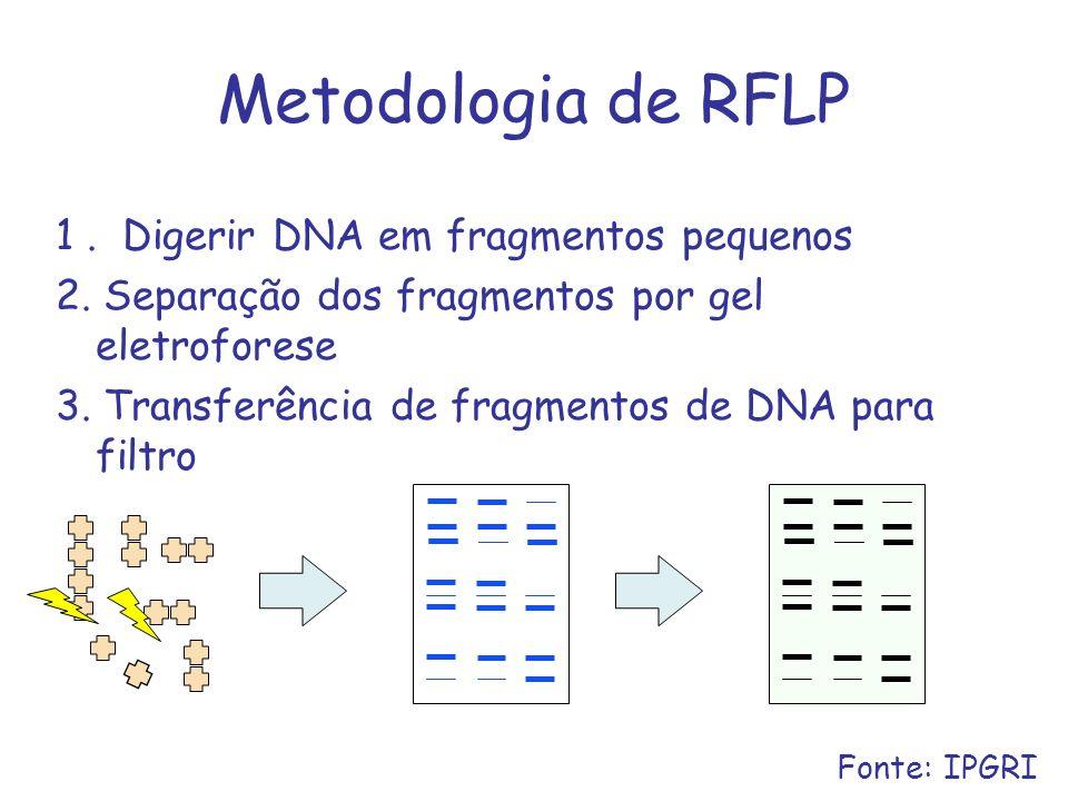 Metodologia de RFLP 1 . Digerir DNA em fragmentos pequenos