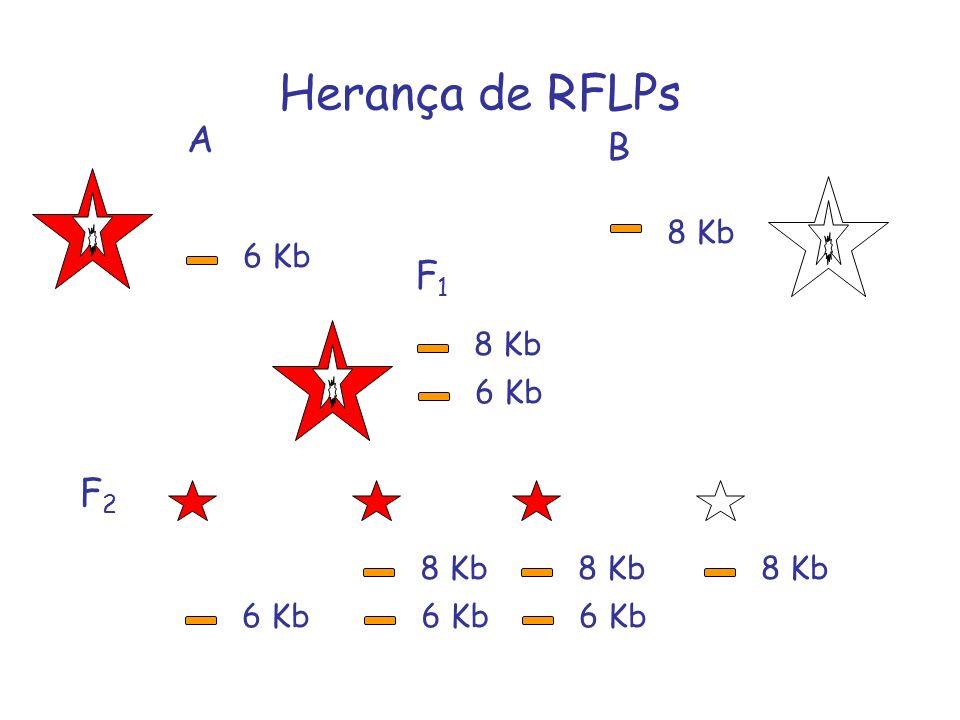 Herança de RFLPs A B F1 F2 8 Kb 6 Kb 8 Kb 6 Kb 8 Kb 8 Kb 8 Kb 6 Kb