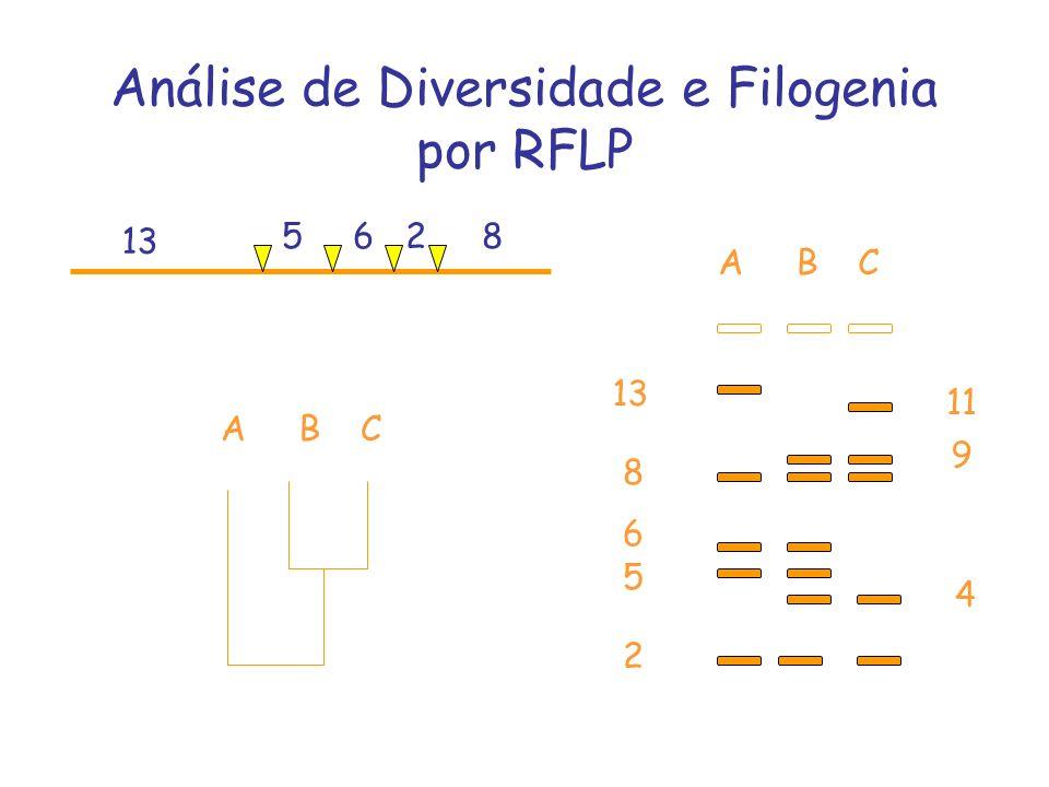 Análise de Diversidade e Filogenia por RFLP