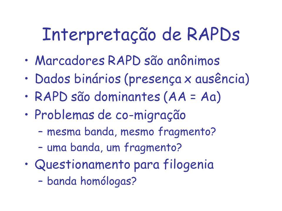 Interpretação de RAPDs
