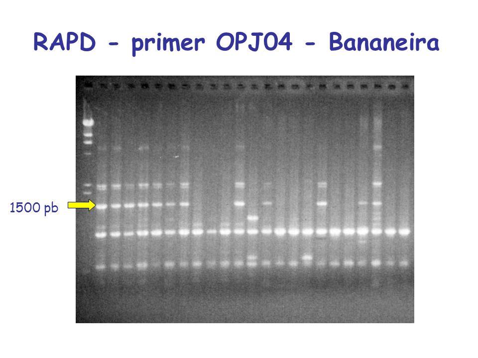 RAPD - primer OPJ04 - Bananeira