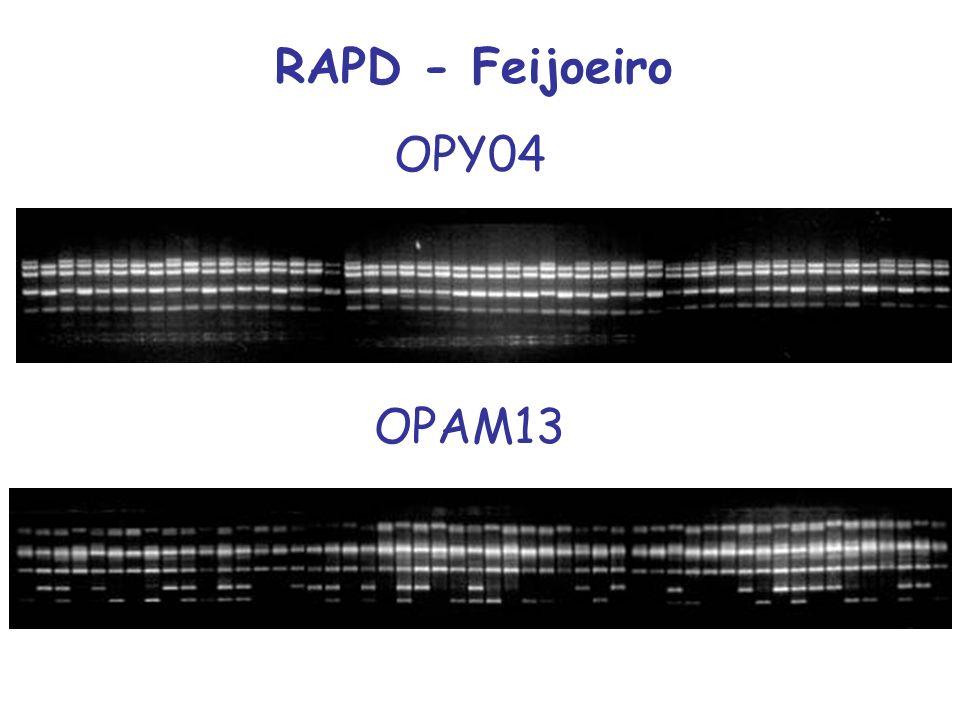 RAPD - Feijoeiro OPY04 OPAM13