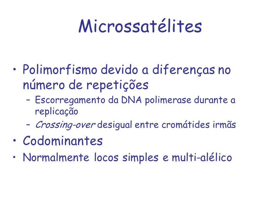 Microssatélites Polimorfismo devido a diferenças no número de repetições. Escorregamento da DNA polimerase durante a replicação.