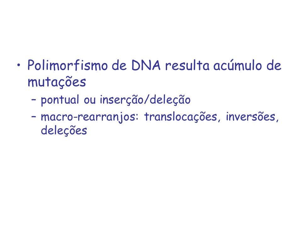 Polimorfismo de DNA resulta acúmulo de mutações