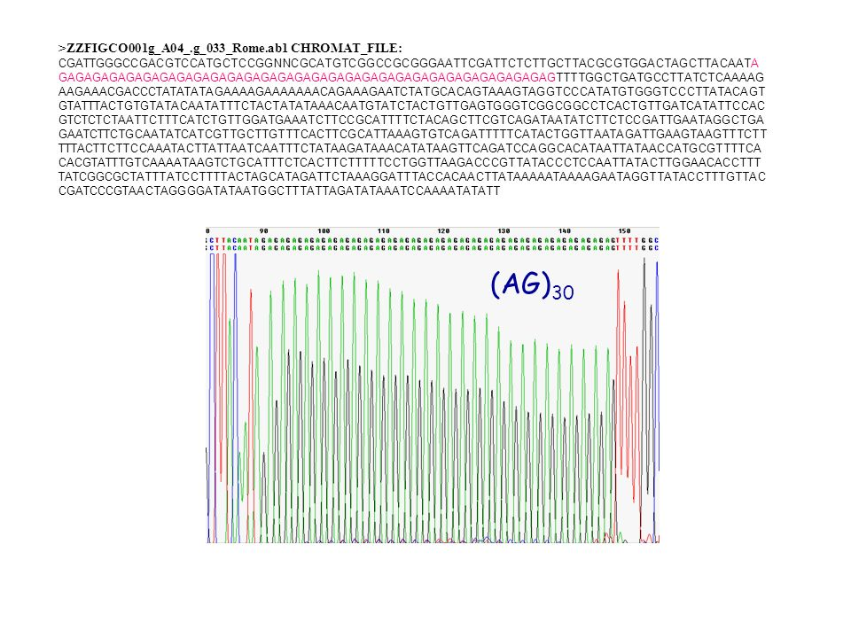 (AG)30 >ZZFIGCO001g_A04_.g_033_Rome.ab1 CHROMAT_FILE: