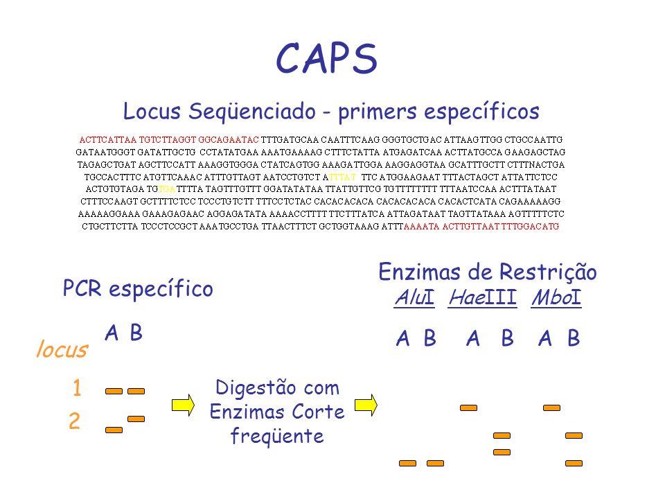 CAPS Locus Seqüenciado - primers específicos Enzimas de Restrição
