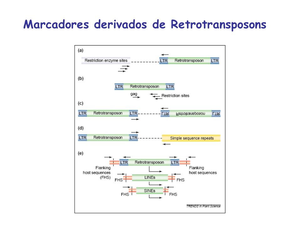 Marcadores derivados de Retrotransposons