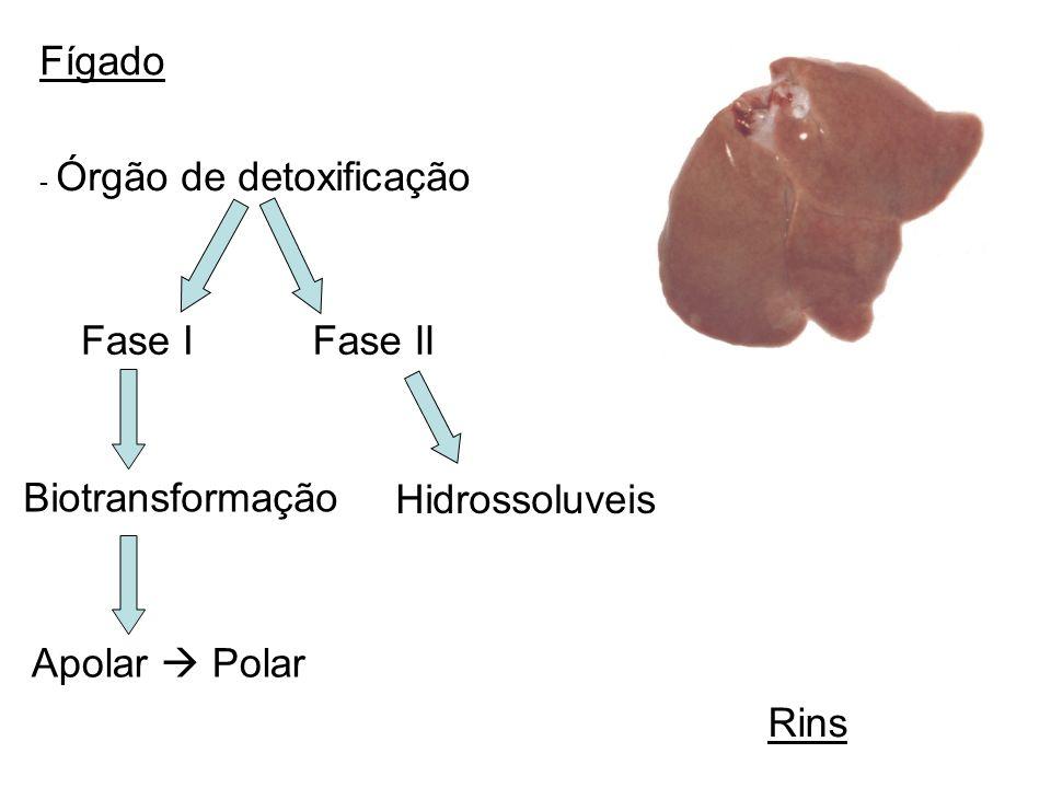 Fígado Fase I Fase II Biotransformação Hidrossoluveis Apolar  Polar