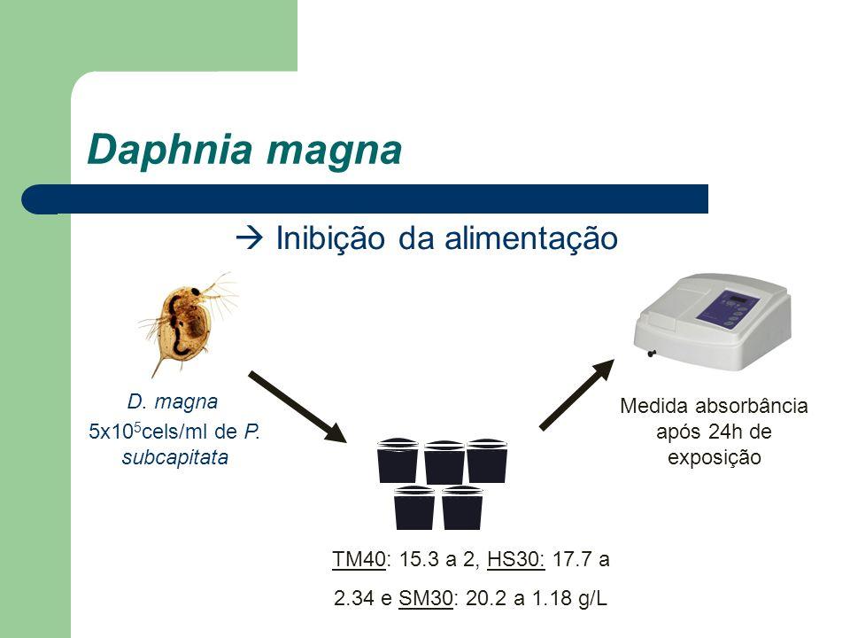 Daphnia magna  Inibição da alimentação D. magna