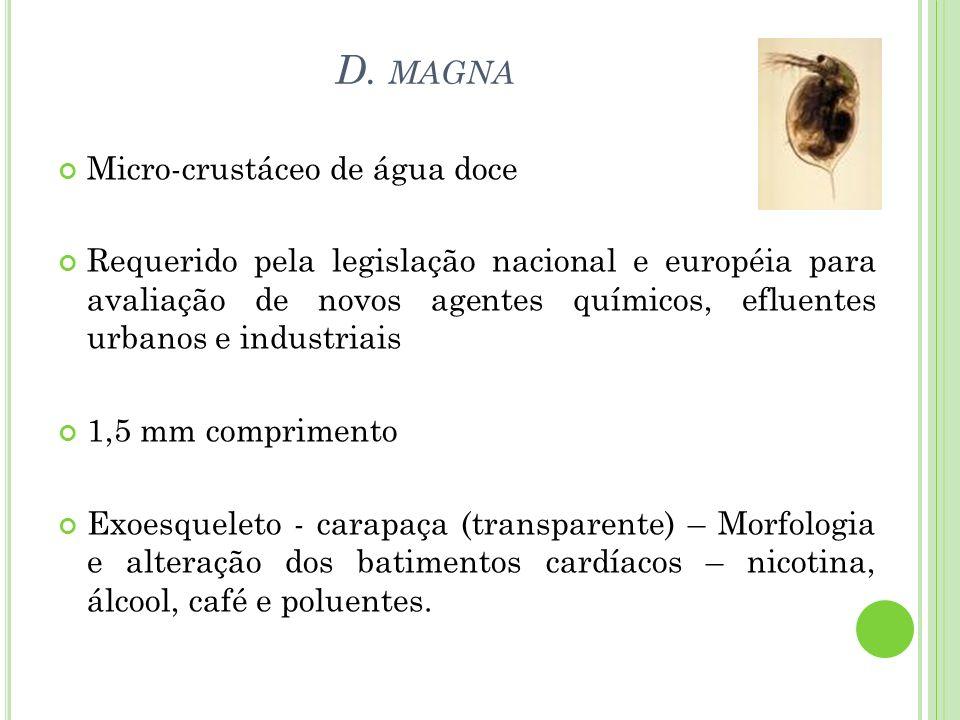 D. magna Micro-crustáceo de água doce