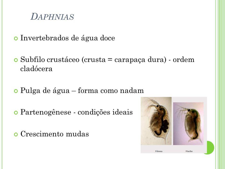 Daphnias Invertebrados de água doce