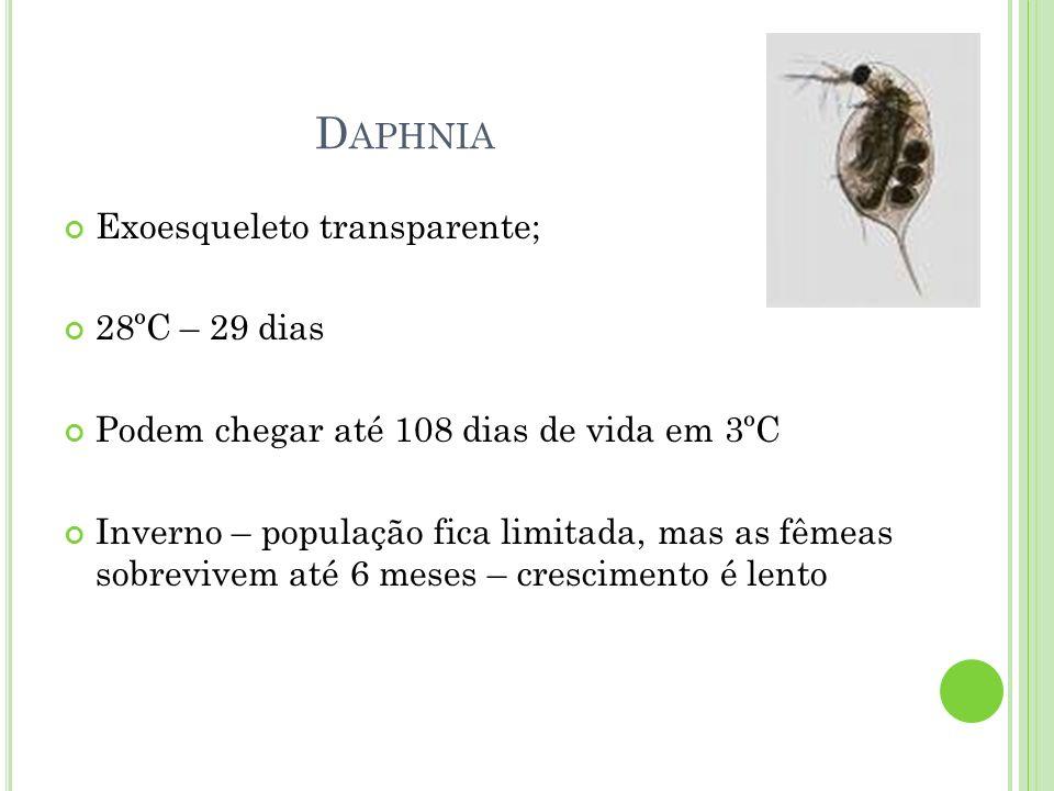Daphnia Exoesqueleto transparente; 28ºC – 29 dias