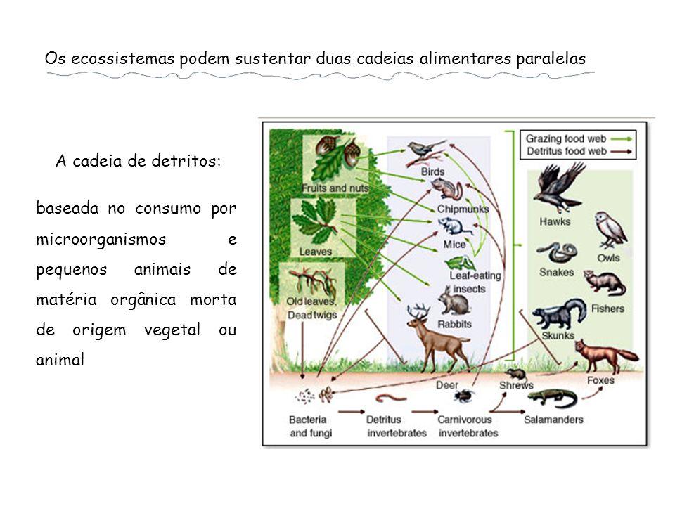 Os ecossistemas podem sustentar duas cadeias alimentares paralelas