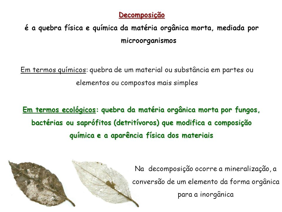 Decomposição é a quebra física e química da matéria orgânica morta, mediada por microorganismos.
