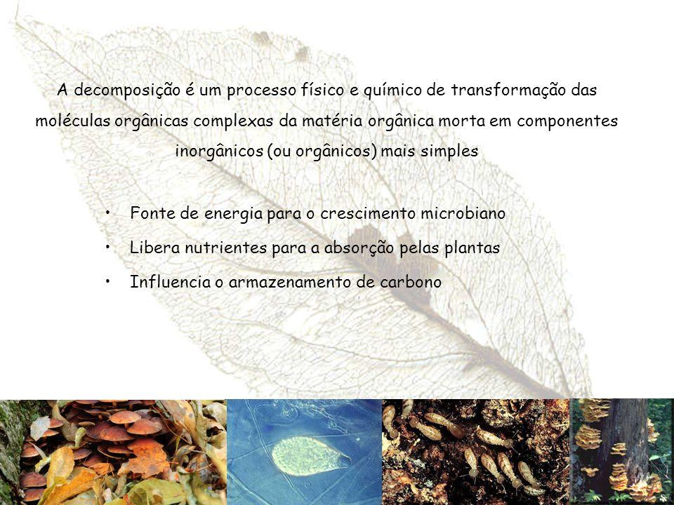 A decomposição é um processo físico e químico de transformação das moléculas orgânicas complexas da matéria orgânica morta em componentes inorgânicos (ou orgânicos) mais simples